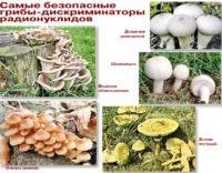 Радиация и грибы