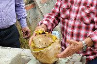 Житель пригорода Новороссийска нашел гриб весом 3 килограмма