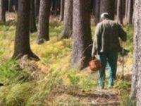 В поисках грибов