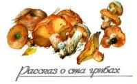 Набор открыток: рассказ о ста грибах