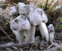 Севастопольцам самое время отправляться по грибы