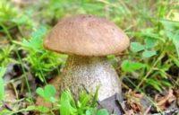 В Пензе открылась выставка грибов