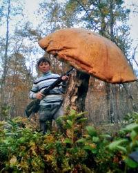 Лучшим грибникам - призы от «Комсомолки»