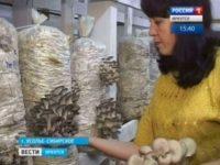 Семья из Усолья-Сибирского выращивает вешенки