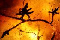 Обнаружено древнейшее свидетельство симбиоза между грибом и тропическим деревом