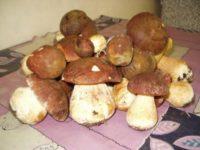 Во владимирских магазинах семян появились «Грибы (мицелий) в субстрате»