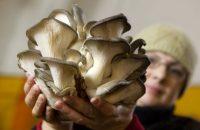 В Феодосии – грибная пора