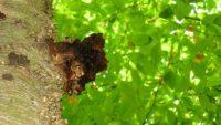 Российские ученые: сибирские грибы могут победить СПИД