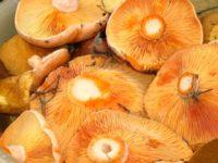 Лучшие грибные места Крыма: собираем рыжиков в Рыбачьем и маслят в Строгановке
