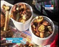 В Нижегородской области небывалый урожай грибов