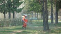 Волгоградские леса спасут от вредителей