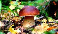 В Рыбновском районе пройдет чемпионат по сбору грибов «Охотник за грибами»