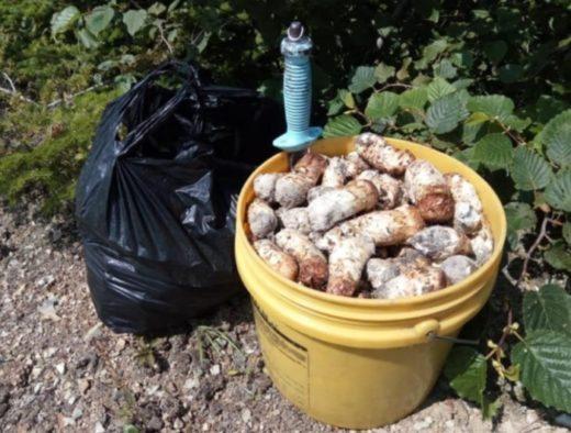 В этом году сезон тихой охоты порадовал сахалинцев небывалым урожаем. Они встречали белые грибы и моховики дажев самых неожиданных местах.