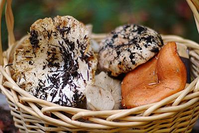Испанский шеф-повар, прогуливаясь по лесу в городе Санта Лусия де Гордон, обнаружил гигантский гриб, который по праву можно считать самым большим в мире.