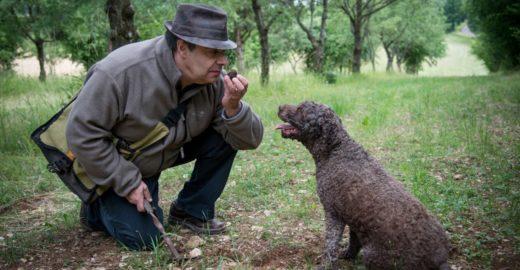«Черное золото леса»: почему грибы трюфели дорого стоят