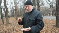 Шесть видов грибов, которые можно найти в ноябре