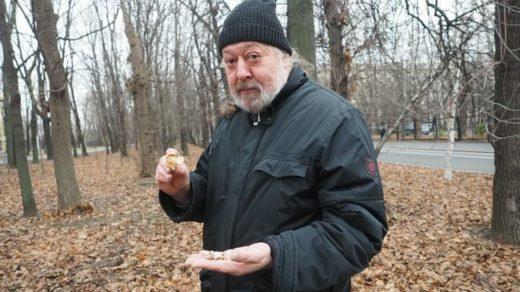 Как считает Максим Дьяков, ведущий специалист кафедры микологии и альгологии биологического факультета МГУ имени М. В. Ломоносова, собирать грибы нужно с осторожностью.