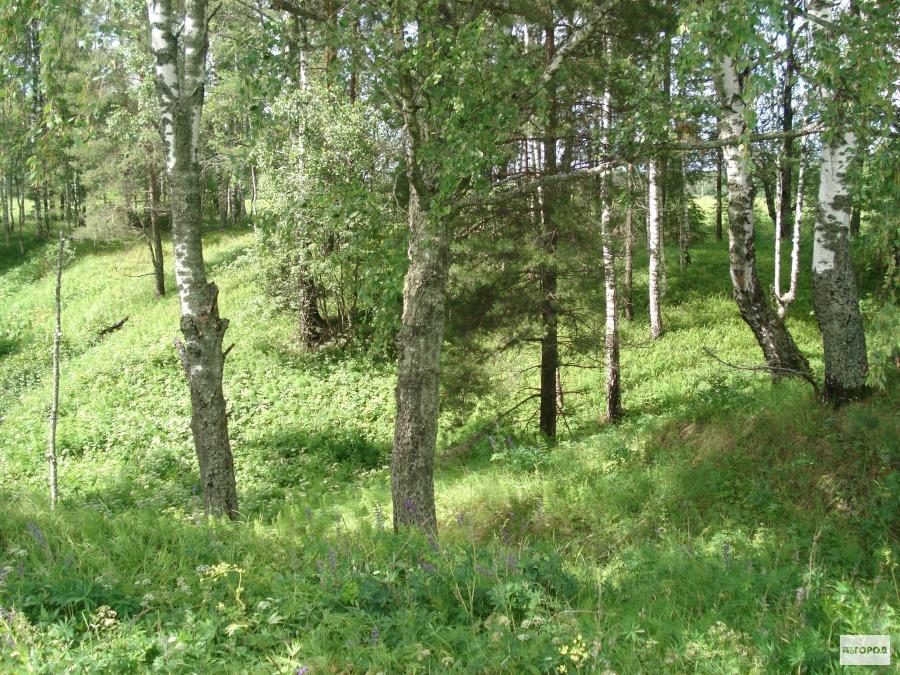 В лесу на равнонной местности легче всего заблудиться