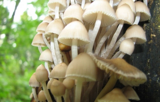 Осторожно: грибной сезон. фото с clip.dn.ua