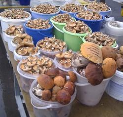 В Перми небывалый урожай грибов