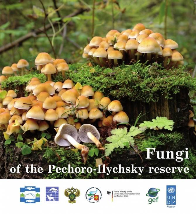 Книгу о грибах Печоро-Илычского заповедника издали на английском языке