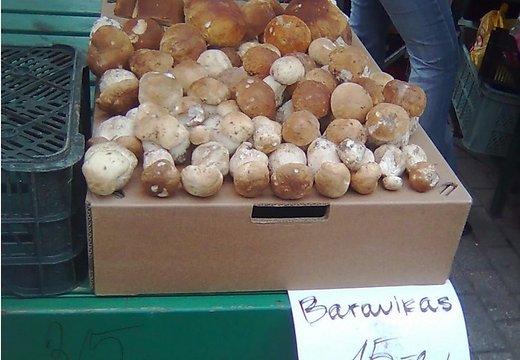 В пятницу, в Юрмале продавались первые подосиновики - не больше 10 штук, а в воскресенье на центральном рынке в двух местах можно было увидеть первые белые грибы