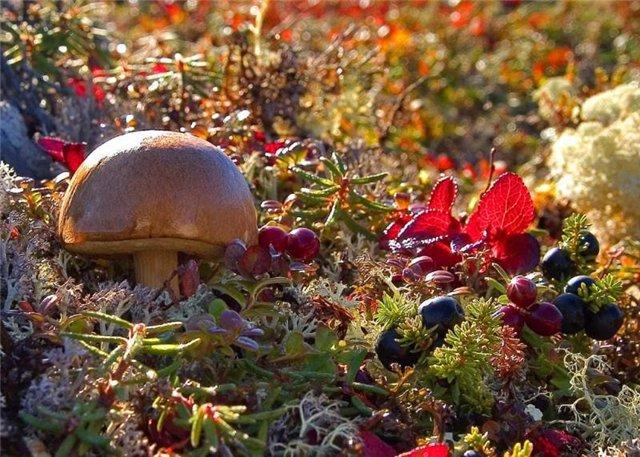 Россияне предпочитают отдыхать в лесу, собирая грибы и ягоды
