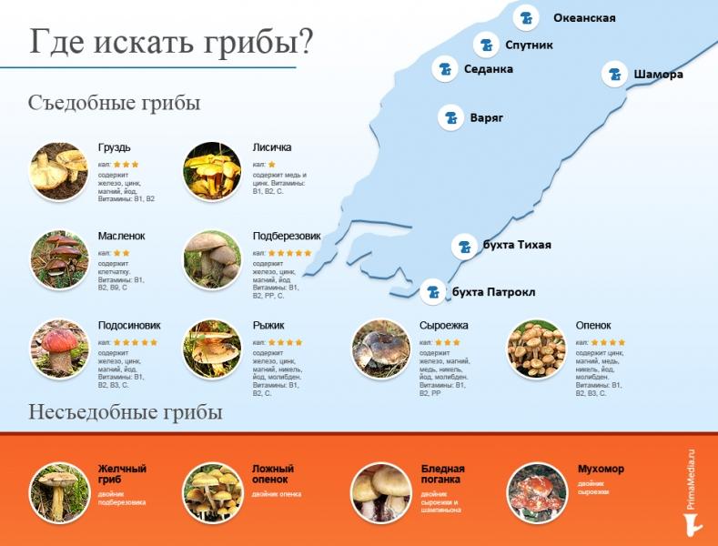 Грибы можно найти во Владивостоке и в пригороде. Автор: РИА PrimaMedia