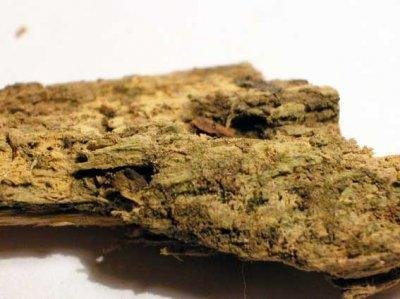 В заповеднике «Брянский лес» микологи нашли 105 новых видов грибов