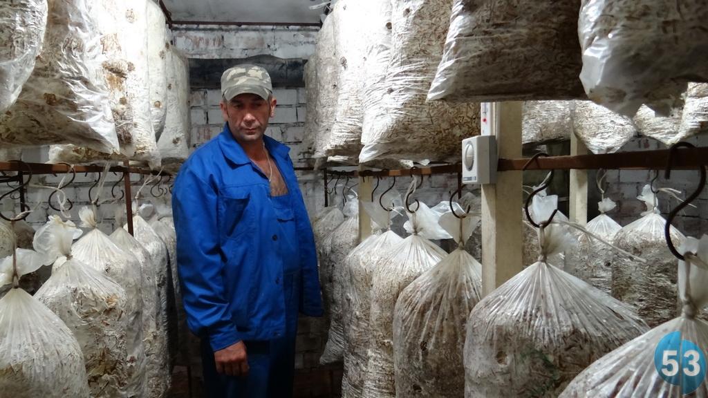 В семье грибы и сами собирают, и у своих сельчан урожай закупают. Сделана специальная сушильная камера.