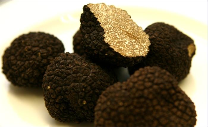 По мнению сайта www.sciencedaily.com, черный трюфель (Tuber melanosporum) - наиболее дешевый и экологичный вид грибов, дружелюбно относящийся к другим растениям и пригодный для культивации в сельской местности.