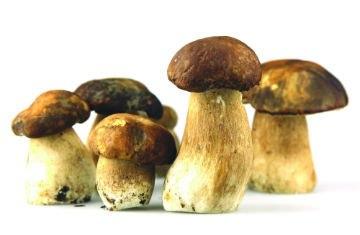 Так ли вредны дикорастущие грибы для человека