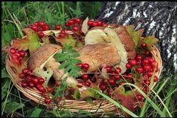 В Томской области планируют собирать больше грибов и ягод