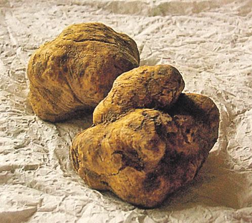 Самый дорогой гриб трюфель