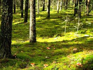 В Псковской области утвердили программу возрождения школьных лесничеств