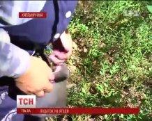 Украинцы возмущены ведением налога на сбор ягод, грибов и орехов