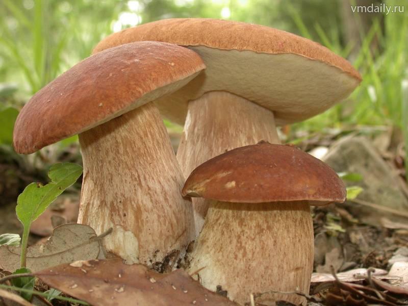 Хороший грибник найдет гриб всегда