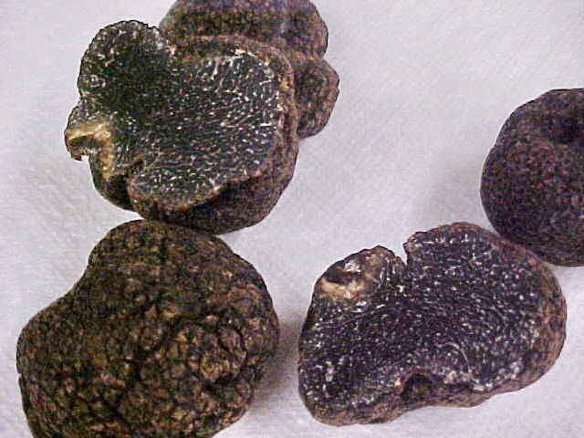 Tuber Himalayensis Trufa de Himalaya Трюфель гималайский