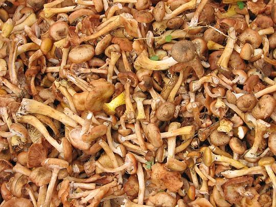 Почем грибочки в Одинцово?