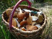 В лесах Омского региона появились первые весенние грибы