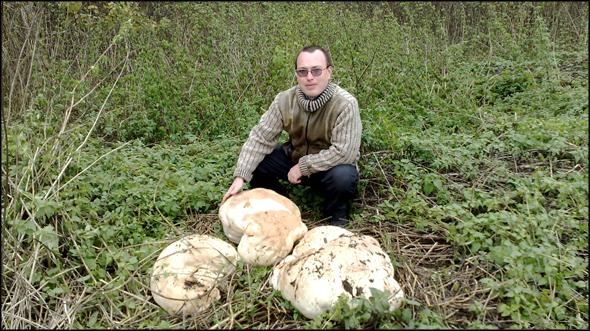 Рядом с поселком Муромцево Судогодского района Владимирской области натуралисты нашли загадочные грибы гигантских размеров.