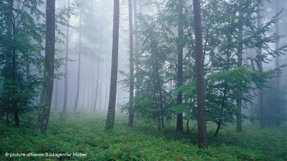 Грибная пора в одном из лесов Айфеля
