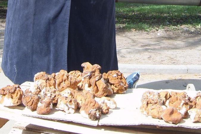 И сморчки, и строчки сейчас достигли пика своего роста. Грибники, торгующие этими весенними грибами, говорят, что собрать их можно сейчас везде.