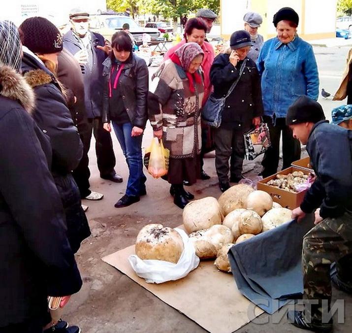 В Измаиле продают гигантские грибы весом 7 кг