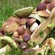 С одесских рынков исчезли грибы