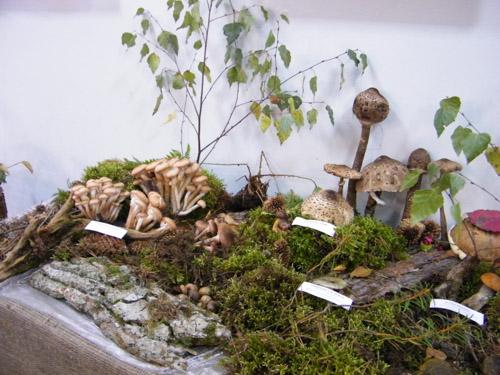 Краеведческий музей приглашает посетить уникальную выставку живых грибов