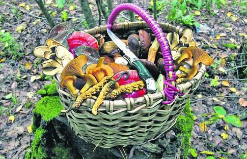 Фунготерапия - лечение грибами