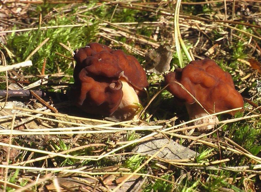 Первые грибы напоминают, что лес нуждается в покое