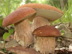 """Врач: """"Детям, пожилым и беременным грибы есть нельзя"""""""