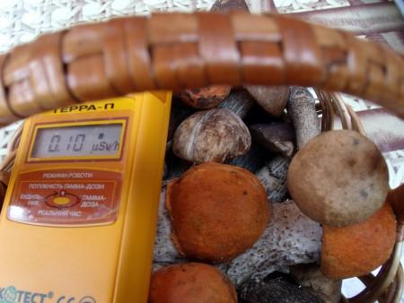 Содержание цезия-137 в пробах грибов и ягод превышено в ряде районов Калужской области